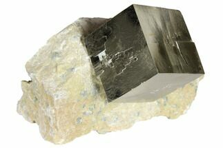 Pyrite - Fossils For Sale - #118266