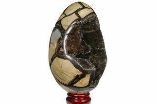 "Buy 5.7"" Septarian ""Dragon Egg"" Geode - Black Crystals - #120877"
