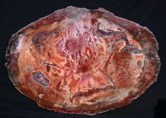 "31"" Wide, Brilliant Red Petrified Wood Tabletop"