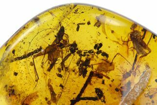 Buy Fossil Cricket With Insect  Cluster In Amber - Myanmar - #122074