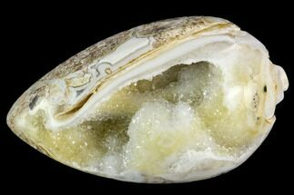 "1.4"" Chalcedony Replaced Gastropod With Druzy Quartz - India For Sale, #123324"