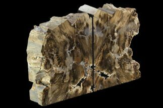 "Buy 6.4"" Petrified Wood (Sequoia) Bookends - Oregon - #123454"