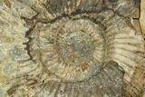"4.9"" Ammonite In Septarian Nodule - Madagascar - #124161-1"