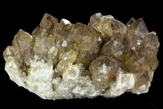 "9.2"" Dark, Smoky Citrine Cluster - Congo For Sale, #124550"