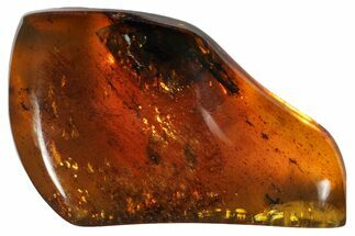 "2.0""  Polished Chiapas Amber (10 grams) - Mexico For Sale, #114878"