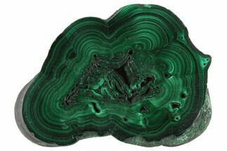 "Buy 2.4"" Polished Malachite Slice - Congo - #125707"
