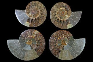 Various - Fossils For Sale - #117108