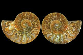 "3.25"" Sliced Ammonite Fossil (Pair) - Agatized For Sale, #125015"