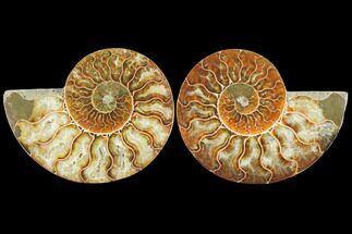 "Buy 3.45"" Sliced Ammonite Fossil (Pair) - Agatized - #125038"