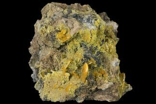 "2.4"" Wulfenite and Mimetite Association - Mexico For Sale, #127397"