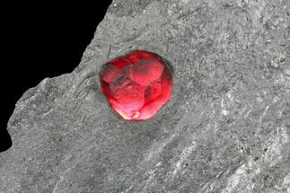 Garnet var. Almandine & Graphite - Fossils For Sale - #127791
