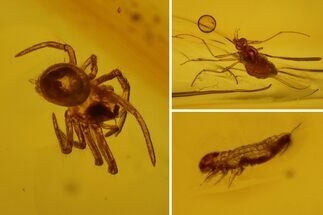 Order Araneae (Spider), Subclass Collembola (Springtail) & Order Diptera (Fly) - Fossils For Sale - #128340