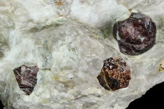 Garnet var. Pyrope & Quartzite - Fossils For Sale - #128391