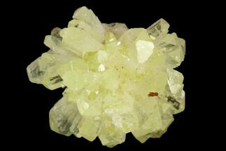 ".7"" Yellow-Green Adamite Crystal Cluster - Durango, Mexico For Sale, #127031"