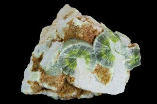 Wavellite - Fossils For Sale - #127125