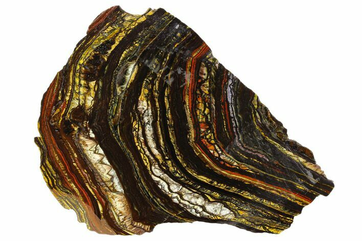 "4.8"" Polished Tiger Iron Stromatolite - 3.02 Billion Years"