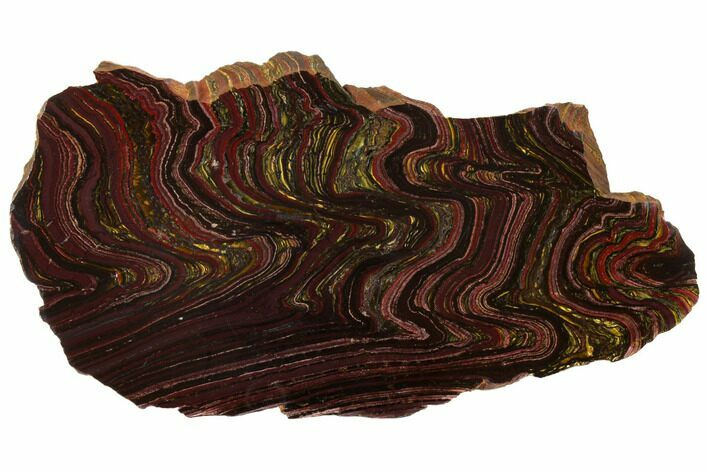 "9.1"" Polished Tiger Iron Stromatolite - 3.02 Billion Years"