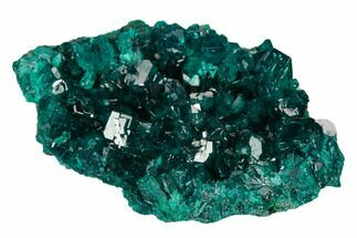"Buy 1.8"" Gorgeous, Gemmy Dioptase Crystal Cluster - Congo - #129541"