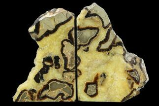 Septarian - Fossils For Sale - #129930