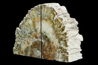 "5.9"" Tall, Colorful Petrified Wood Bookends - Madagascar For Sale, #129938"