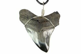 "2.15"" Fossil Megalodon Tooth Necklace - Serrated Blade For Sale, #130376"