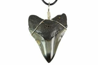 "Buy 2.1"" Fossil Megalodon Tooth Necklace - #130390"