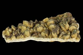 "3.8"" Pyrite Encrusted Barite Crystal Cluster - Poland (New Find) For Sale, #130505"