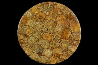 "Buy 8"" Composite Plate Of Agatized Ammonite Fossils - #130585"