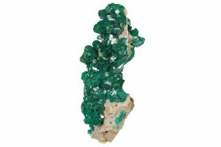"Buy 1.9"" Gemmy Dioptase Cluster on Dolomite - Ntola Mine, Congo - #130498"