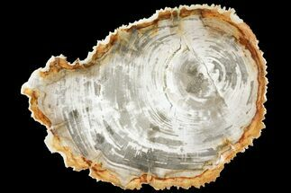 "Buy 11.4"" Tropical Hardwood Petrified Wood Dish - Indonesia - #131452"