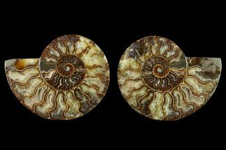 "Buy 5.4"" Agatized Ammonite Fossil (Pair) - Beautiful Preservation - #129997"