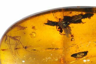 Fossil Wasp (Hymenoptera) & Flies (Diptera) In Amber - Myanmar For Sale, #131966