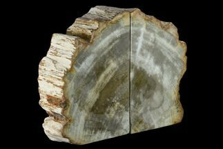 "8"" Tall, Petrified Wood (Tropical Hardwood) Bookends - Indonesia For Sale, #132026"