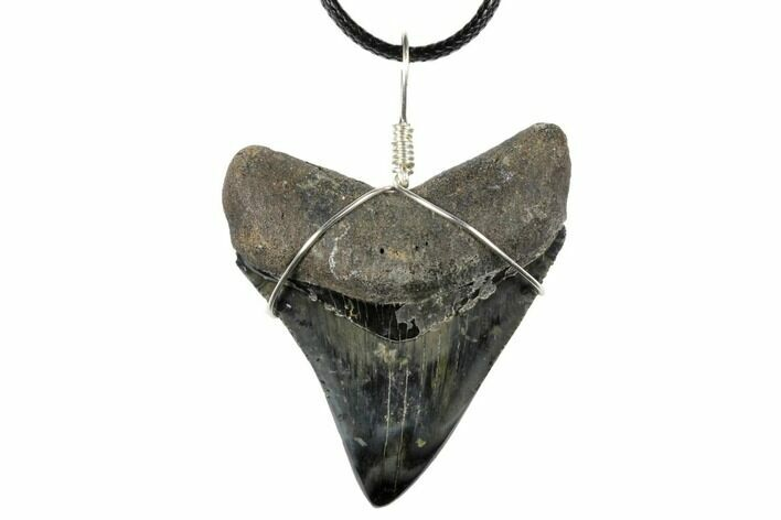 "2.35"" Fossil Megalodon Tooth Necklace"