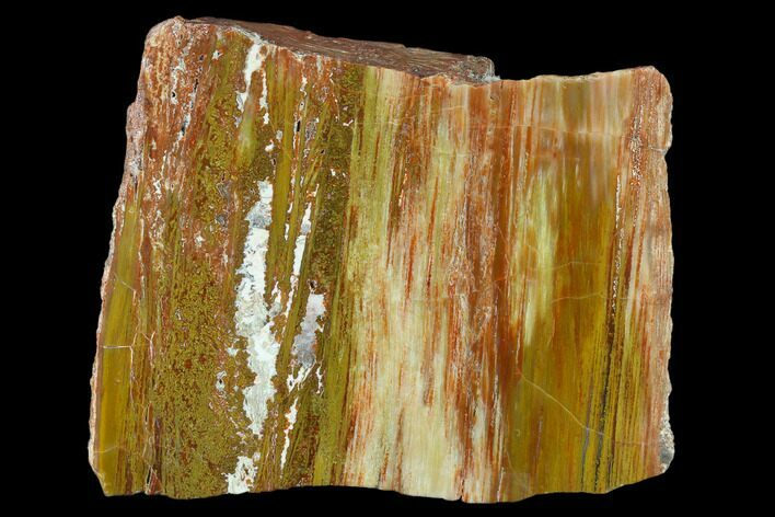 "5"" Colorful Petrified Wood (Araucarioxylon) Section - Arizona"