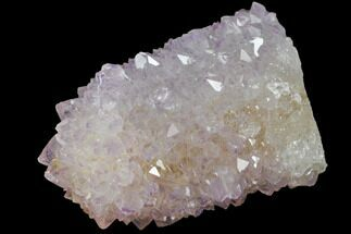 "Buy 1.45"" Cactus Quartz (Amethyst) Crystal - South Africa - #132478"