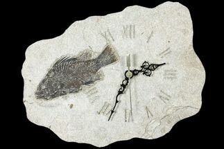 "Buy 11.3"" Wide Clock With Cockerellites Fish Fossil - Wyoming - #132880"