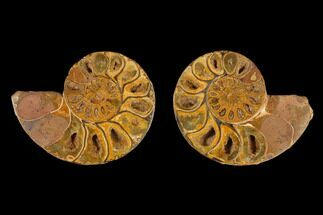 "3.7"" Cut & Polished Agatized Ammonite Fossil (Pair)- Jurassic For Sale, #131708"