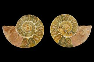 "3.4"" Cut & Polished Agatized Ammonite Fossil (Pair)- Jurassic For Sale, #131711"