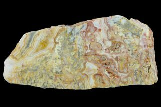 "7.8"" Polished, Crazy Lace Agate Slab - Western Australia For Sale, #132932"