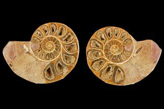 "Buy 3.2"" Cut & Polished Agatized Ammonite Fossil (Pair)- Jurassic - #131626"