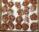 "Wholesale Lot: 1 3/4 to 2 1/4"" Twinned Aragonite Clusters  - 38 Pieces - #134143-1"