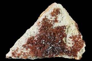 "4.7"" Ruby Red Vanadinite Crystals on Barite - Morocco For Sale, #134708"