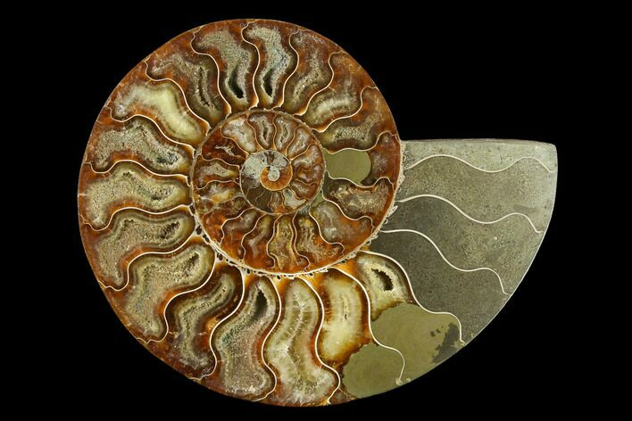 "6.5"" Agatized Ammonite Fossil (Half) - Madagascar"