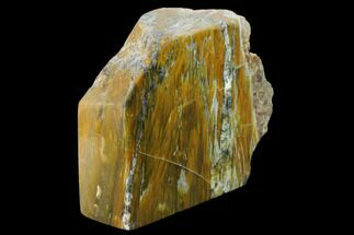 "3.9"" Petrified Wood (Araucioxylon) Rip-Cut - Circle Cliffs, Utah For Sale, #135635"