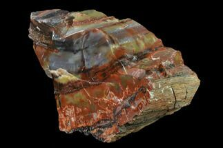"Buy 9.1"" Colorful, Polished Petrified Wood Section - Arizona - #136192"