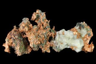 "5.1"" Natural, Native Copper Formation - Michigan For Sale, #136676"