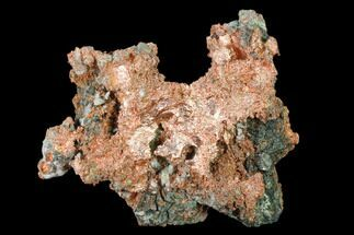 Copper - Fossils For Sale - #136680