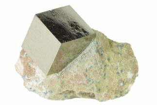 Pyrite - Fossils For Sale - #136728