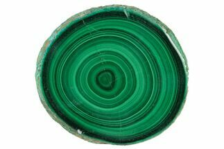 "Buy 2.4"" Polished Malachite Stalactite Slice - Congo - #137059"